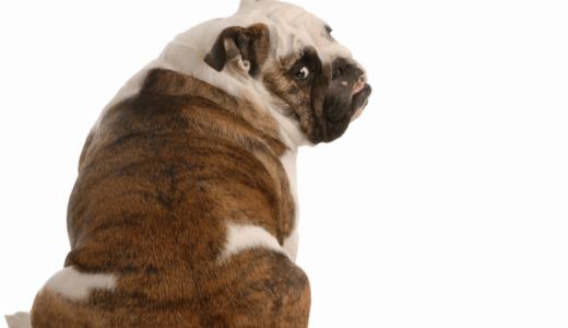 犬の背中はしこりができやすい?小さくて柔らかい膿ができる原因と見つけた場合の対処法3選