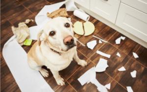 育犬ノイローゼは誰でもなる?犬を飼うことで陥る症状や原因、育犬ノイローゼの克服法は?