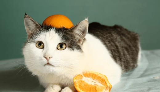 猫は柑橘類の匂いが嫌い?食べると中毒を引き起こす理由とすっぽりハマる可愛いグッズ5選!