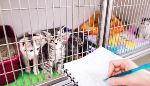 猫の保護施設とはどんなところ?東京近郊にある施設を知って殺処分を減らそう!