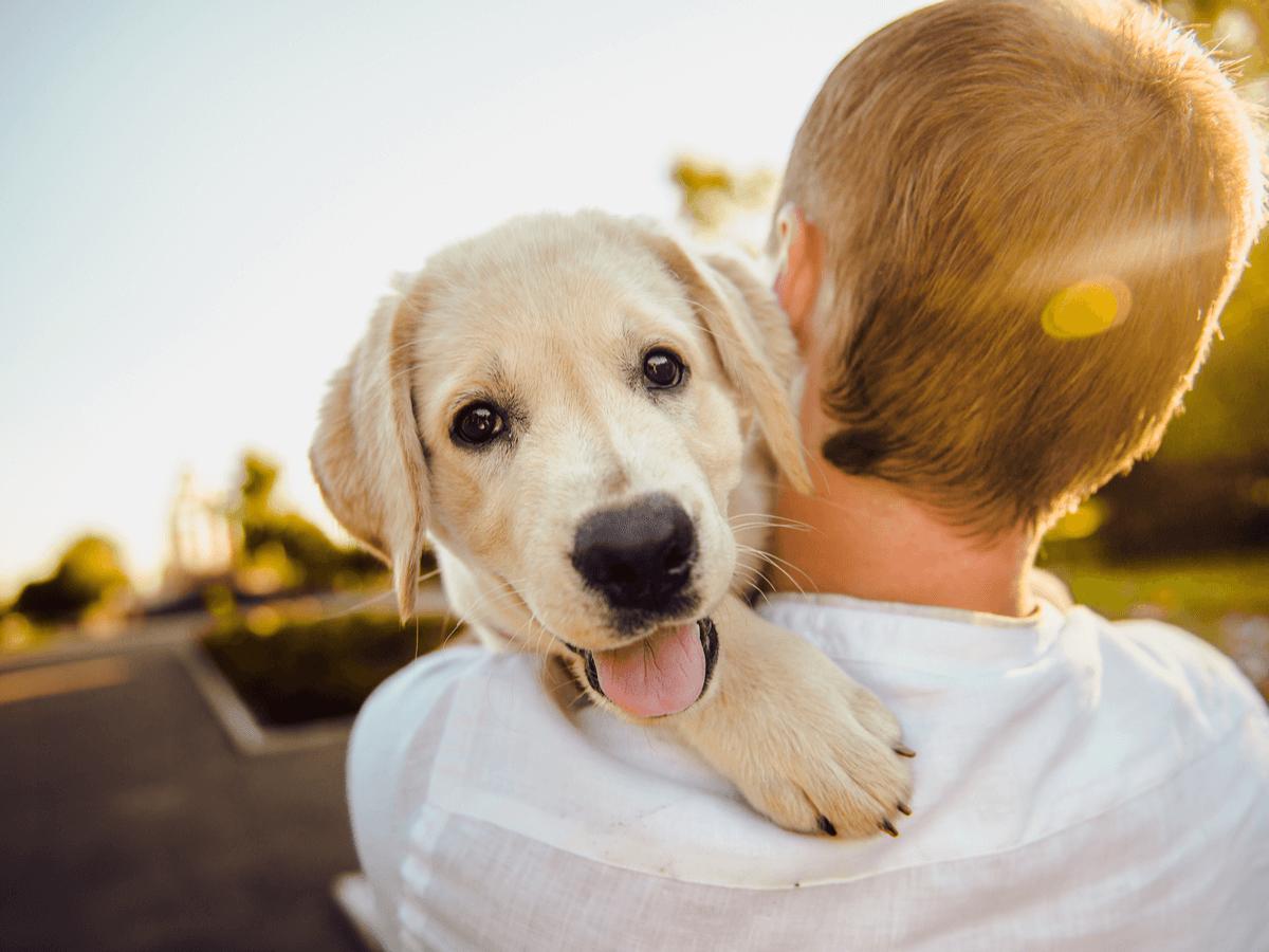 犬のワクチン接種時期や費用、狂犬病などその種類についてご紹介します!