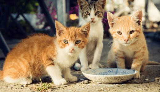 猫の殺処分はなぜ起きる?減らすためにできる7つのこと