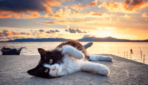 猫島は楽園のような場所!日本全国にあるおすすめスポット25選