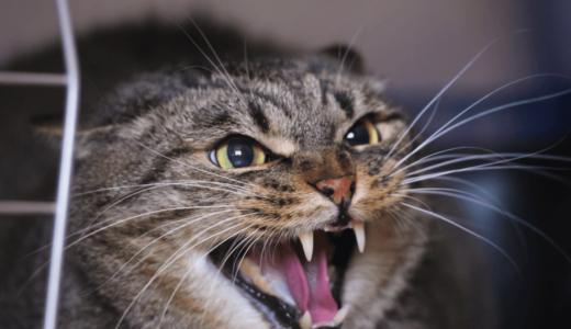 猫の威嚇にはどんな意味があるの?されたときの対処法を知ろう
