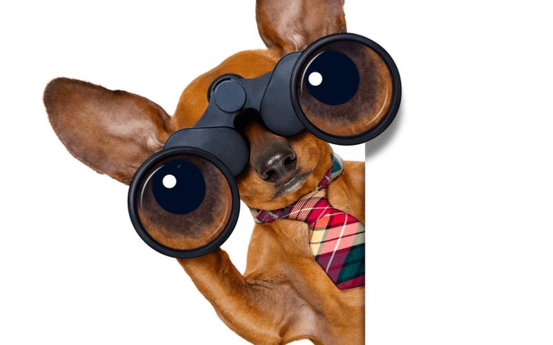 【新サービス提供開始】AI搭載の最先端ペット見守りサービス「ペットみるん」が提供スタート