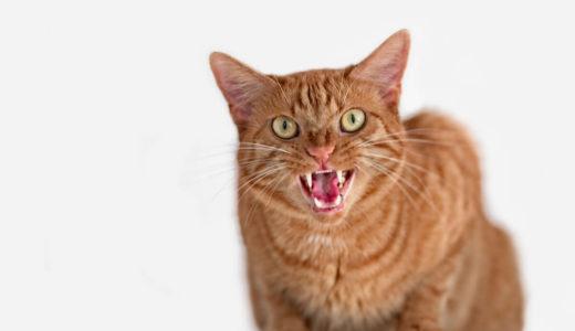 猫が凶暴化する原因はしつけや病気が関係している?すぐにできる4つの対処法を身につけよう!
