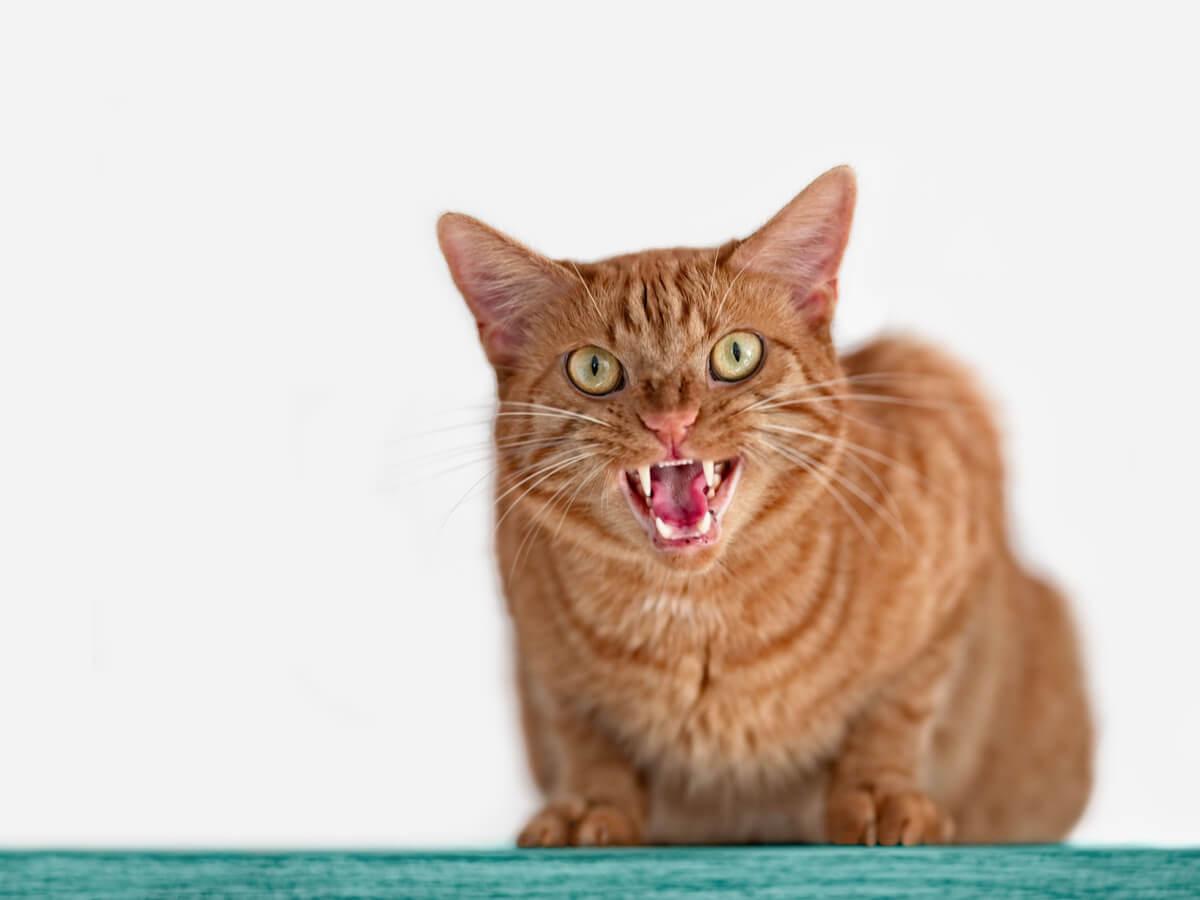 猫が凶暴化した経験ありますか?その原因と気持ちに寄り添い解決に導く方法5選