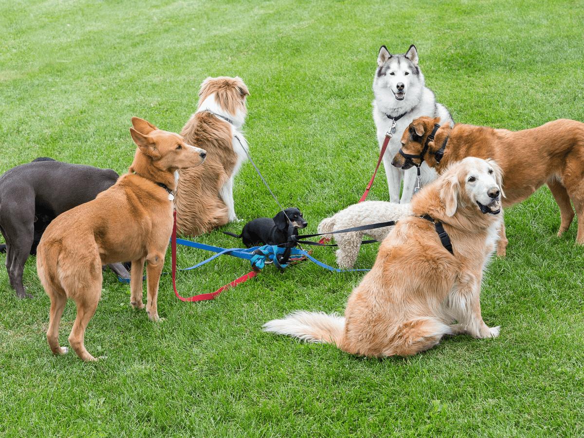 大型犬の特徴とおすすめしたい飼いやすい犬種20選!