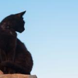 クールでミステリアスな黒猫の性格は?16種類の黒猫を紹介