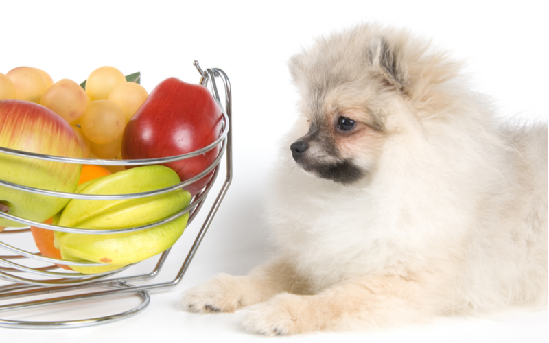 犬にいちじくはNG!その理由と食べてしまったときの対処法とは?