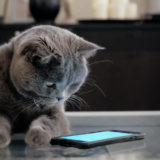 猫じゃらしの人気アプリ3選と猫用アプリ4選!ぜひ、お試ししませんか?