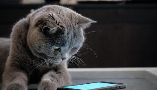 猫じゃらしアプリが大人気!編集部おすすめ7選をご紹介