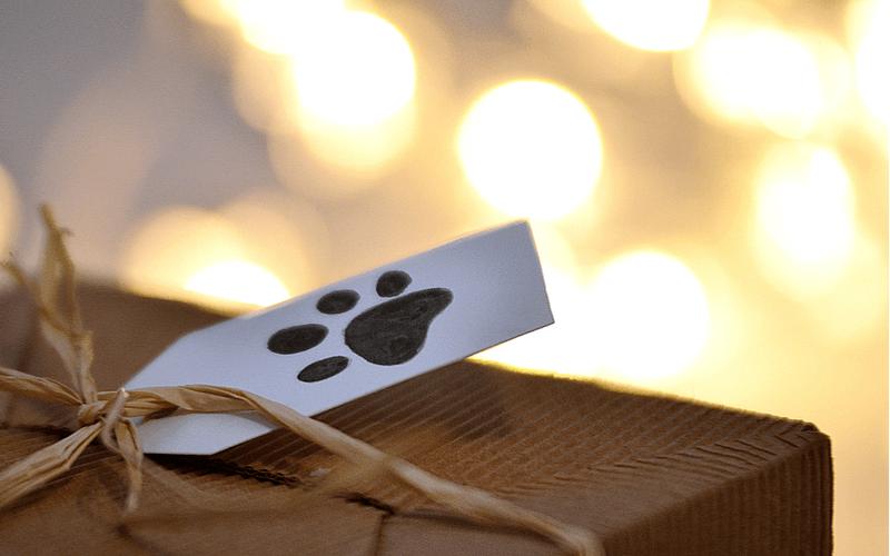 防災から愛犬の命を守る「スペシャルオータムボックス」を2018年9月1日「防災の日」より発売開始