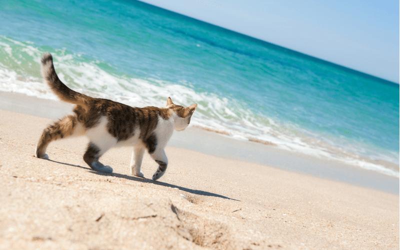 猫の楽園猫島!日本全国25つの猫島を徹底紹介!