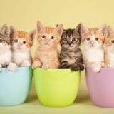 猫 たくさん