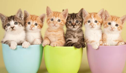 猫を多頭飼いしたい人必見!そのメリットや注意点・相性のいい組み合わせもご紹介