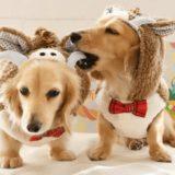 編集部が選ぶ小型犬の人気ランキングTOP10!特徴と飼いやすさをご紹介