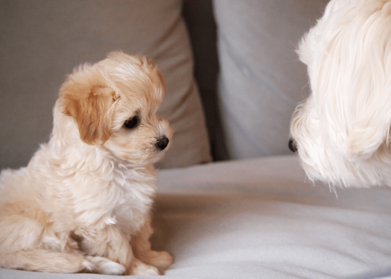 ミックス犬の特別感が話題!人気ランキング・トップ10を徹底解説