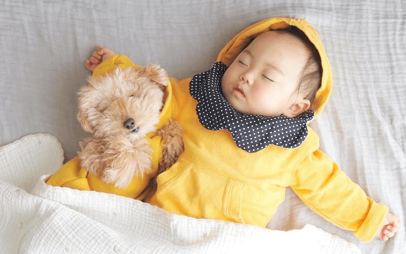 赤ちゃんと犬は一緒に暮らしても大丈夫?一緒にいることのメリットと注意点
