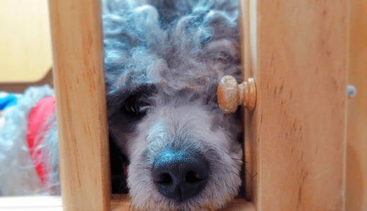愛犬の留守番を安心・安全に!おすすめグッズとカメラアプリをご紹介