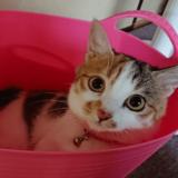 雑種猫のは無限大!種類や特徴、他の猫との違いを解説します