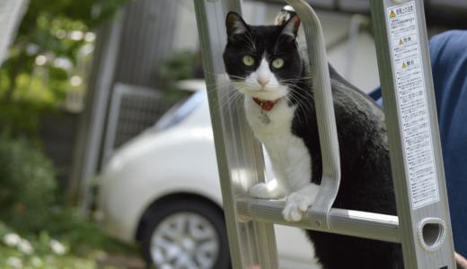 保護猫の譲渡会は全国で行なわれている!里親と運命的な出逢いをした「あずきちゃん」を紹介