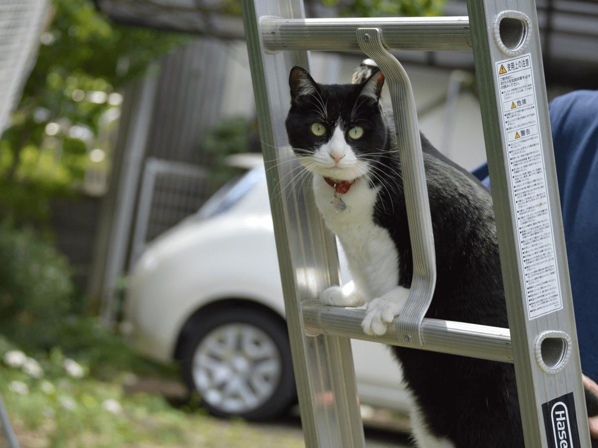 保護猫って?日々飼い主を求めている猫たちの現実とは