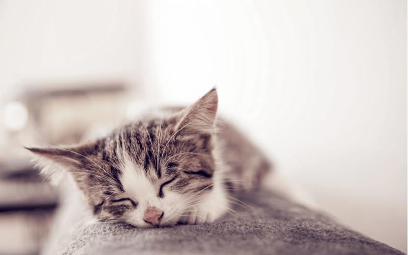 猫にネギはNG!原因と万が一のときの対処法、日々における注意点とは