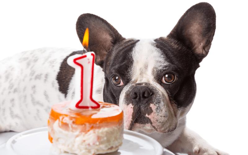 犬用ケーキはどこで買えるの?大阪にある販売店を紹介!