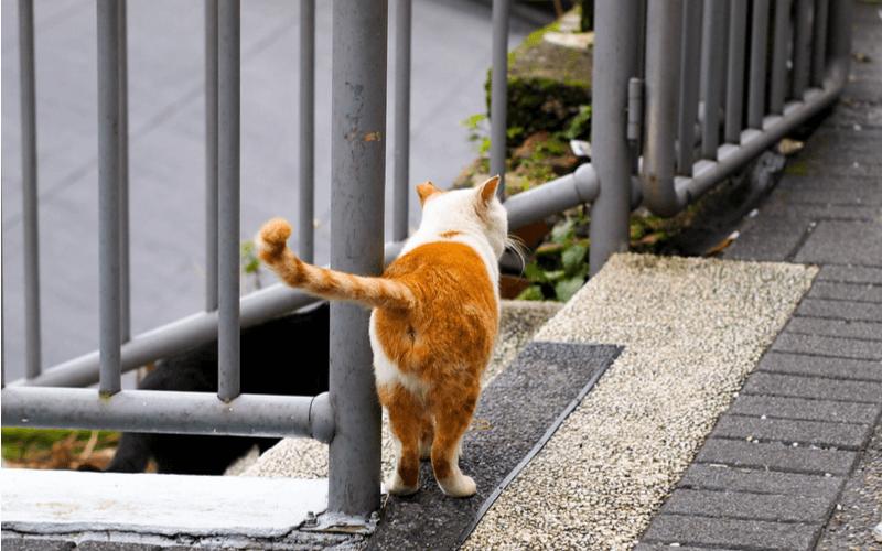 犬や猫にこうもんしぼりは必要?コツを掴んでお尻トラブルから守ろう!