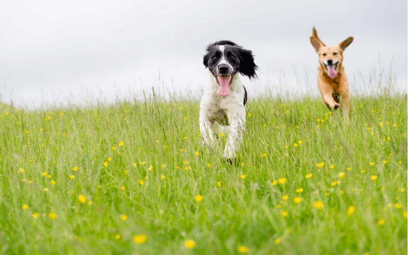 犬にメロンを食べさせても大丈夫?与えるときのポイントや注意点を徹底解説!