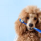 犬も口臭は発生する!原因を知って正しいケアを始めよう