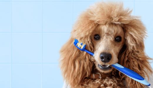 犬も口臭が発生する!ニオイの原因を知って正しいケアを始めよう