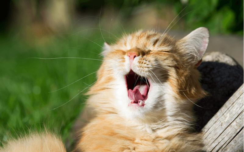 猫の口臭が臭う!その原因と改善策を紹介