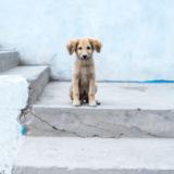野良犬を保護するにはどうしたらいい?保護する方法と保護団体をご紹介