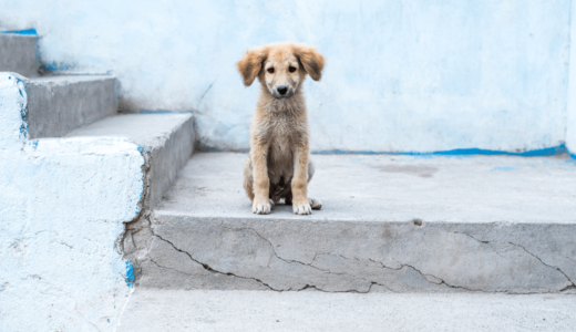 野良犬を保護する方法とは?団体活動している方や警察などの協力を得よう