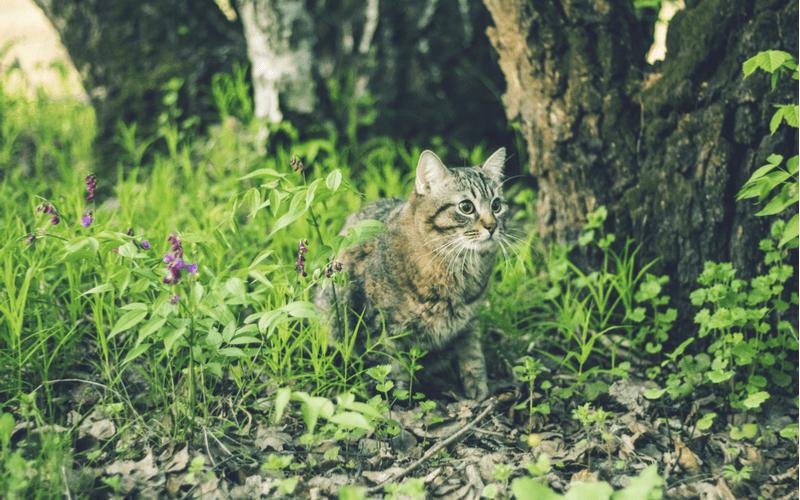 猫が家出?おまじないで帰ってくるなら唱えるよ!猫の家出の理由と帰ってくるまでにすべきこと