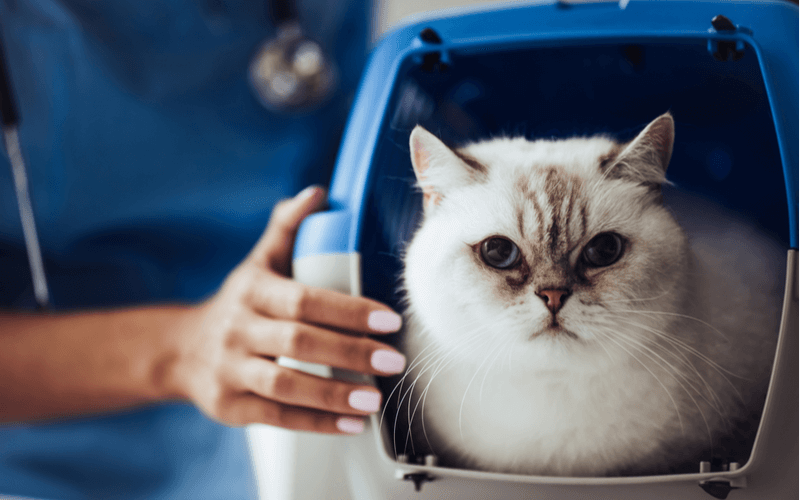 猫をケージで飼っても大丈夫?猫をケージで飼うメリットとおすすめのケージ4つ