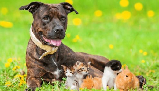 おすすめのペットとは?飼い方を慎重に考えて家族の一員としてお出迎えしよう