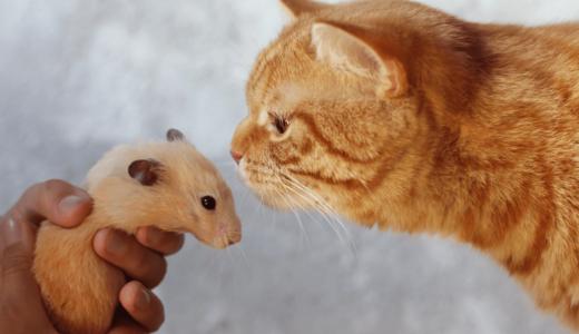 ハムスターと猫は仲良く暮らすことができる?相性や一緒に飼うときの注意点