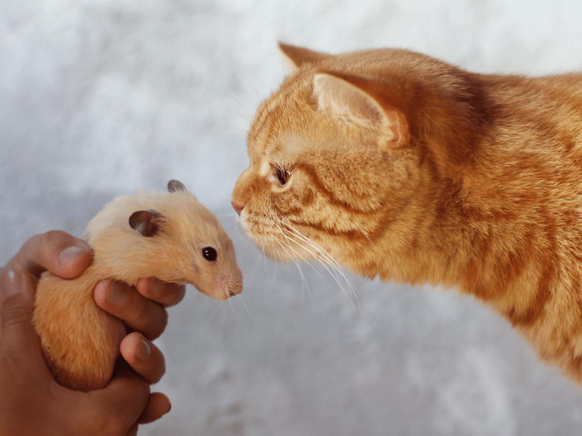 ハムスターと猫は仲良く一緒に暮らすことができるの?