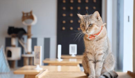 【初心者向けガイド】猫カフェってどんな場所?楽しみ方を知って日々の癒しを求めに行こう!