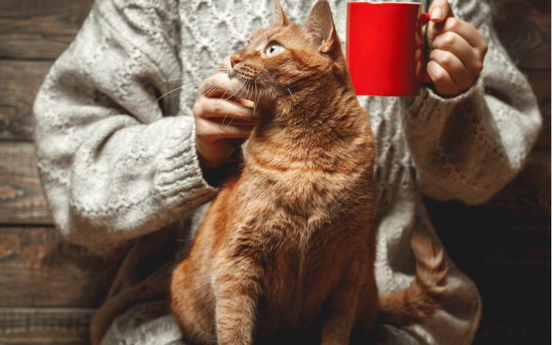 猫カフェってどんな場所?猫カフェ初心者さん向けガイド