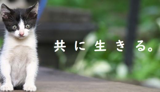 奄美大島で猫の無料不妊手術専門病院がオープン!ノネコを殺処分から救う!
