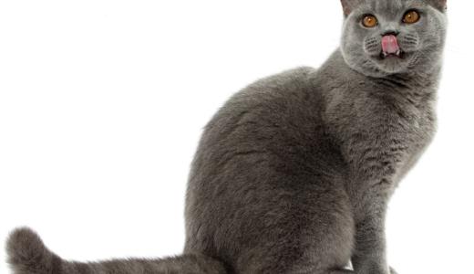 猫種に合わせた適切な食事って?ロイヤルカナンより専用キャットフード登場!