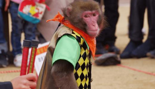 猿の大技芸も登場!大阪の「ワールド牧場」で心に残るふれあい体験をしよう!