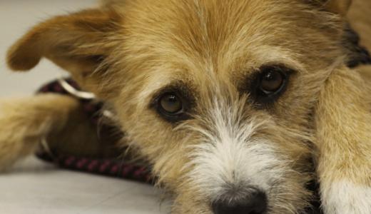 少年院で保護犬の訓練!犬と心を通わせる更生教育プログラムの効果とは?