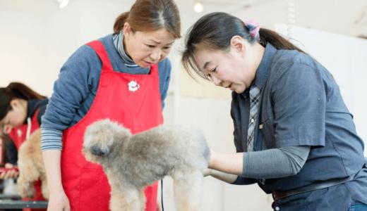 目指すのは愛犬専属トリマー!月々5,000円から学べるトリミング技術で絆を深めよう!