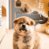 「秋田犬のおやこ」写真集