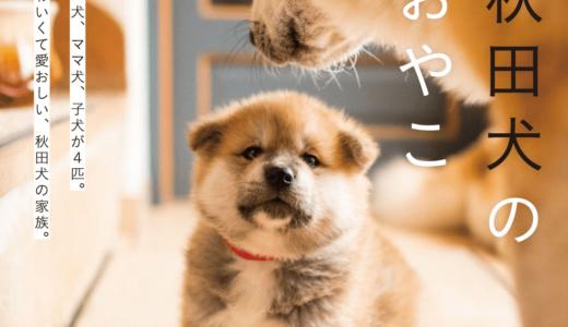 「秋田犬のおやこ」写真集の4姉弟がかわいい!出生からの2ヶ月間に癒されよう!